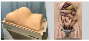 Anatomy urethane casting for Surgery Simulator