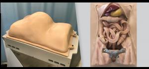 Anatomy urethane casting for Surgery Simulator